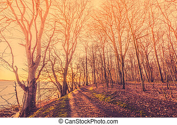 Sunrise in a forest with spooky trees