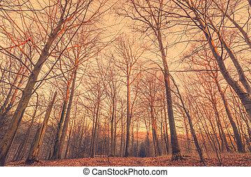Sunrise in a Scandinavian forest