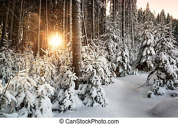 Sunrise in a snowy forest