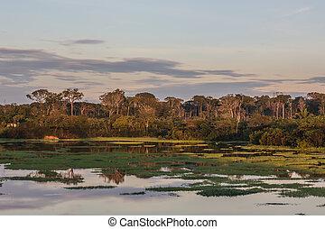 Sunrise in Amazonian jungle, Manaus, Brazil