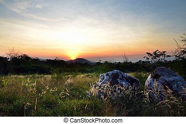 Sunrise in green rural field