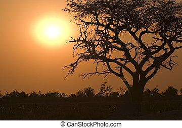 Sunrise in Moremi Game Reserve Botswana