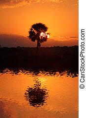 Sunrise In The Everglades - Sunrise over the Florida...