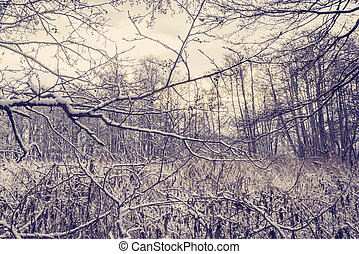 Sunrise in the forest with frozen branches