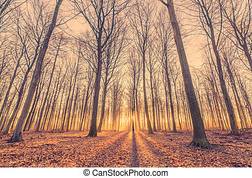 Sunrise in the forest with tall trees