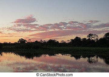 Sunrise in the jungle, Bolivia - Sunrise in the jungle. ...