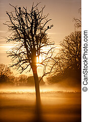 Sunrise in the mist through the trees