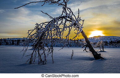 sunrise in the mountains, one small tree bends for winter