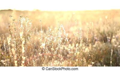 Sunrise In The Steppe
