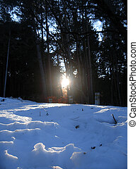 Sunrise in the winter forest by early morning