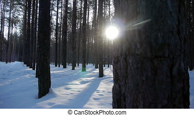 Sunrise in the winter forest