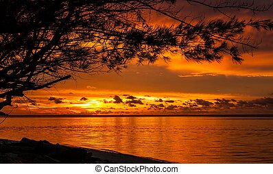 Sunrise in tropical sea with tree and clouds
