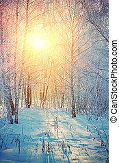 sunrise in winter birch forest instagram stile