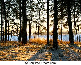 sunrise in winter forest