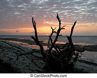 Sunrise Key West Fl