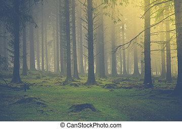Sunrise light in autumn fog forest