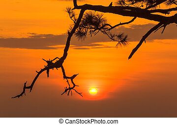 sunrise main attraction of the beautiful of Phu Kradung nation park in Loei province, Thailand