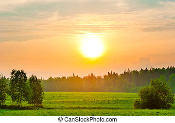 sunrise on a hot day over the summer forest