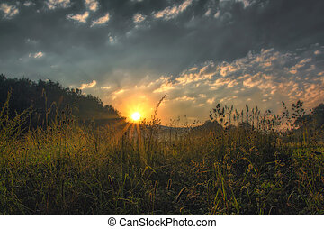 Sunrise on a meadow in the early morning