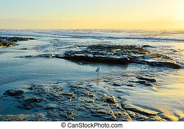 Sunrise on beach with rocks.