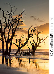 sunrise on the beach with silhouette of trees and golden light