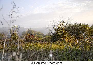 Sunrise on the meadow