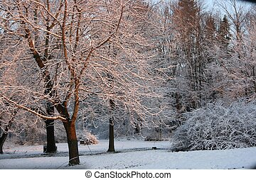 Sunrise on the Snow Covered Trees 2