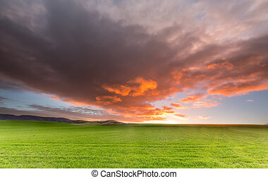 Sunrise over a cereal field