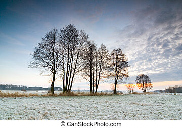 sunrise over a field with frozen tree in the foreground.