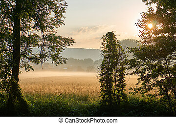 Sunrise over a grainfield with fog. Vivid colors with dramatic clouds. Bayreuth, Germany.