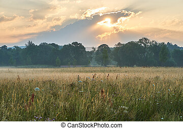 Sunrise over a scenic meadow with natural flowers. Vivid colors with dramatic clouds. Wilhelminenaue, Bayreuth, Germany.