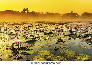 Sunrise over a spring lake with lilies