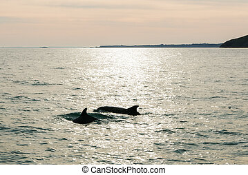 Sunrise over dolphins at sea