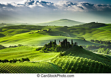 Sunrise over farm of olive groves and vineyards in  Tuscany