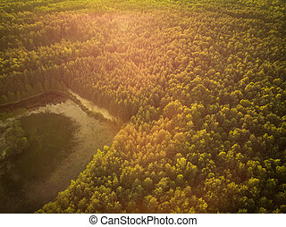 Sunrise over forest in autumn, aerial drone view