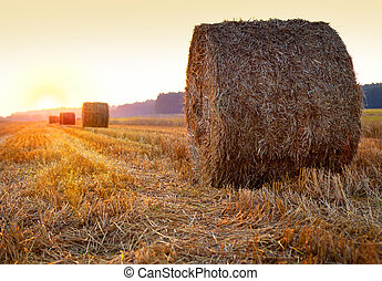 Sunrise over harvested field with hay bales