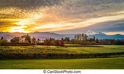 Sunrise over Mt Baker and Vineyard