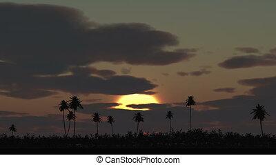 Sunrise palm time lapse, big sun ray