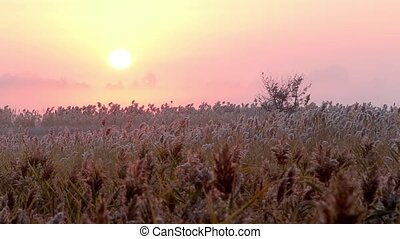 Sunrise over reed in a field in autumn. Time lapse