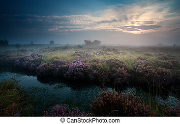 sunrise over swamp with heather - sunrise over swamp with...