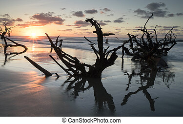 sunrise over the ocean with a beach and trees in the foreground
