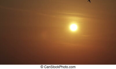 Sunrise over the sea, Birds fly against the background of the sun,Clip 4k high resolution