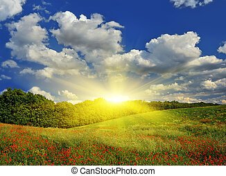 Sunrise over the spring meadow