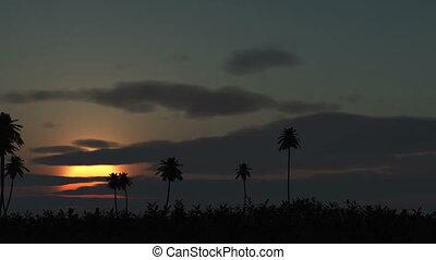 sunrise palm in horison