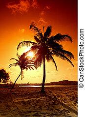 sunrise palm - palm in yellow sunrise sky