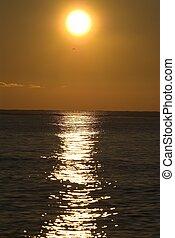 Sunrise - Photo of sunrise on Black Sea with seagull...