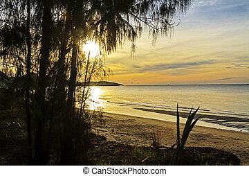 Sunrise silhouette pine