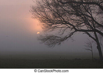 Sunrise, Sparks Lane, Cades Cove - Sunrise in Cade\\\'s...