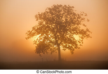 sunrise - the sun goes up behind a tree