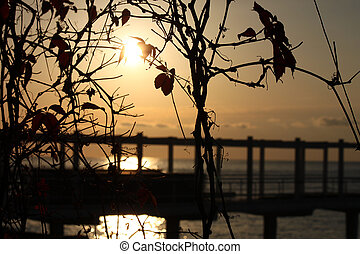 sunrise through leaves of vine